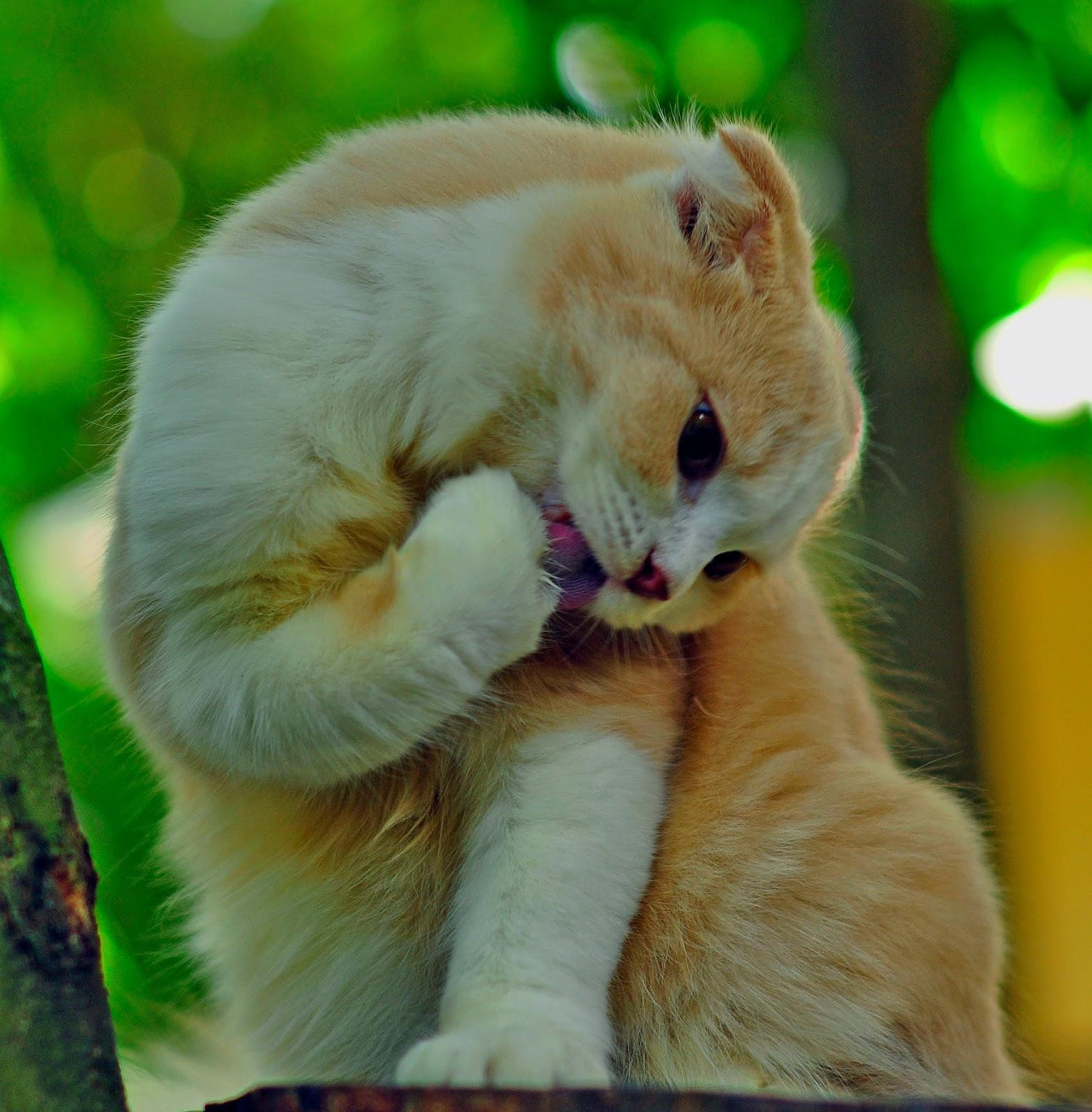 Cat Grooming 3   Memandikan Kucing sendiri.  7c07452d4c