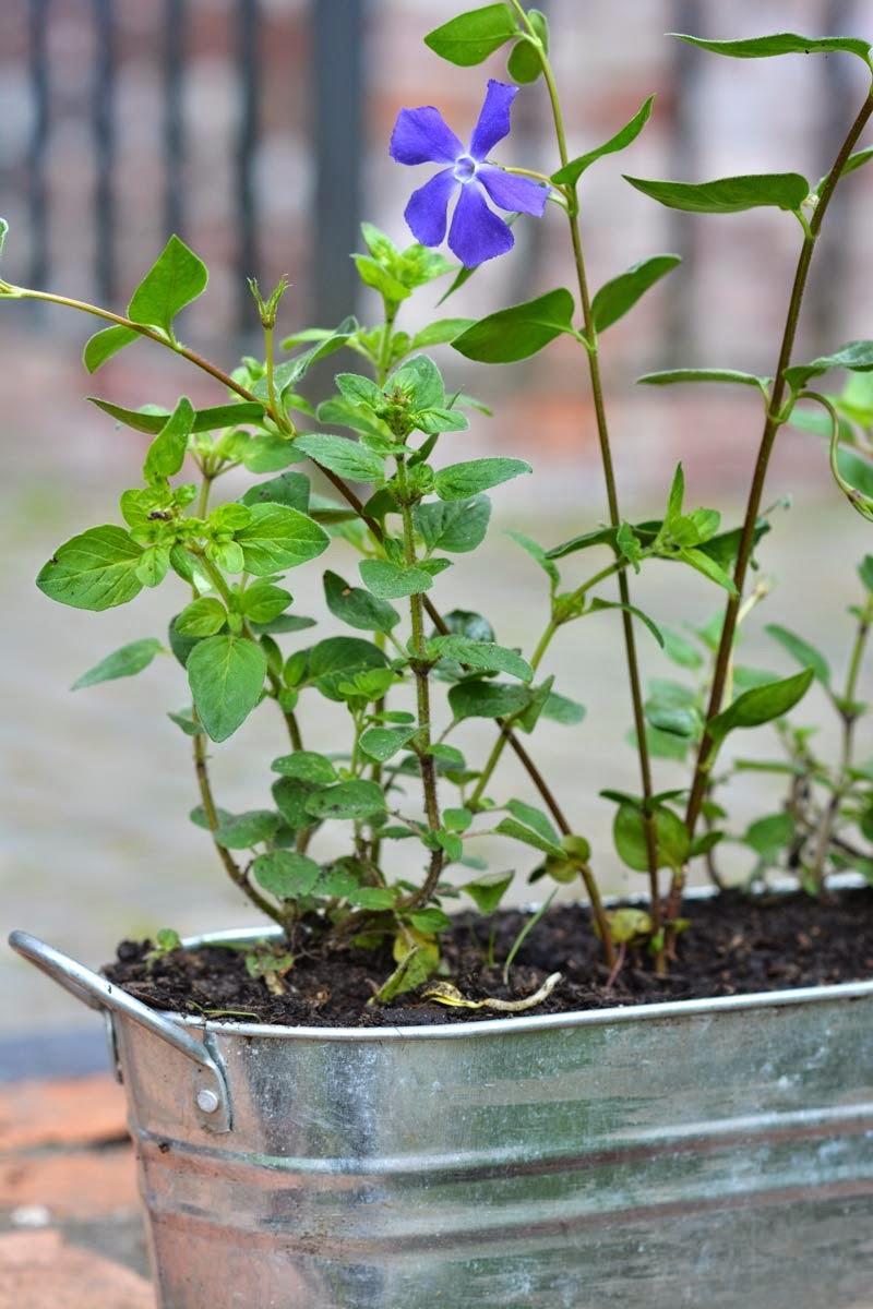 Malachitschatulle Essbare Pflanzen, die sich für jeden Balkon und ...