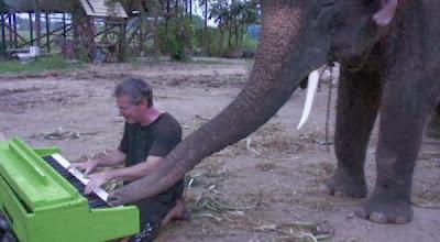 Gajah memang dikenal sebagai salah satu hewan yang cerdas di bumi ini Ada Gajah Bermain Piano di Thailand