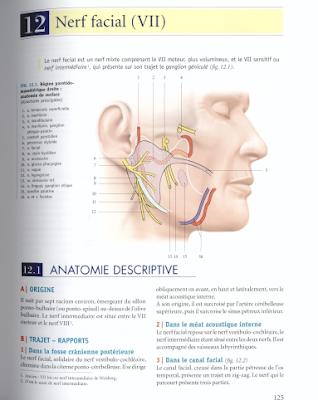 Télécharger Livre Gratuit Nerf Facial VII pdf