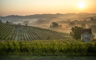 Coppo vineyards Piedmont