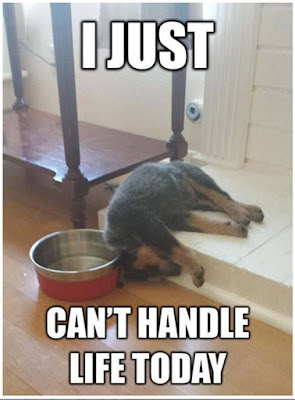 Dog Humor : I just cannot handle life today.