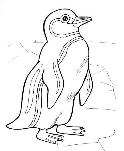 Gambar Mewarnai Pinguin - 4