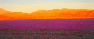 """nature, orage, pluie tonnerre qui gronde dans la sécheresse stérile du désert d'Atacama ocre et minéral... Stérile ? Non, car cette eau amène un fourmillement de vie, des grainnes qui sont restées parfois plusieurs années à attendre patiemment la fécondation des ondées """"fertilisatrices"""" renaissent à la vie et glorifie la beauté immense et la force invincible de la vie."""