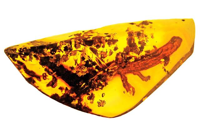 First salamander in amber