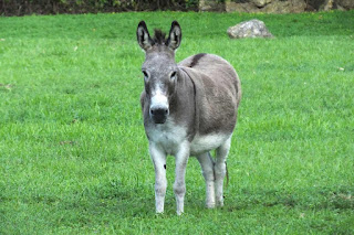 donkeys dream meaning