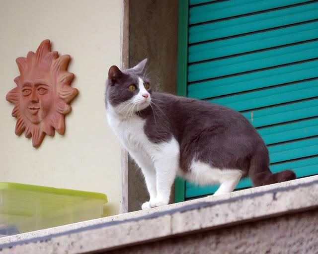 Gatto su un terrazzo, via Ernesto Rossi, Livorno