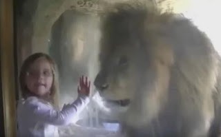 Little Girl Kiss Lion, girl kiss lion, zoo