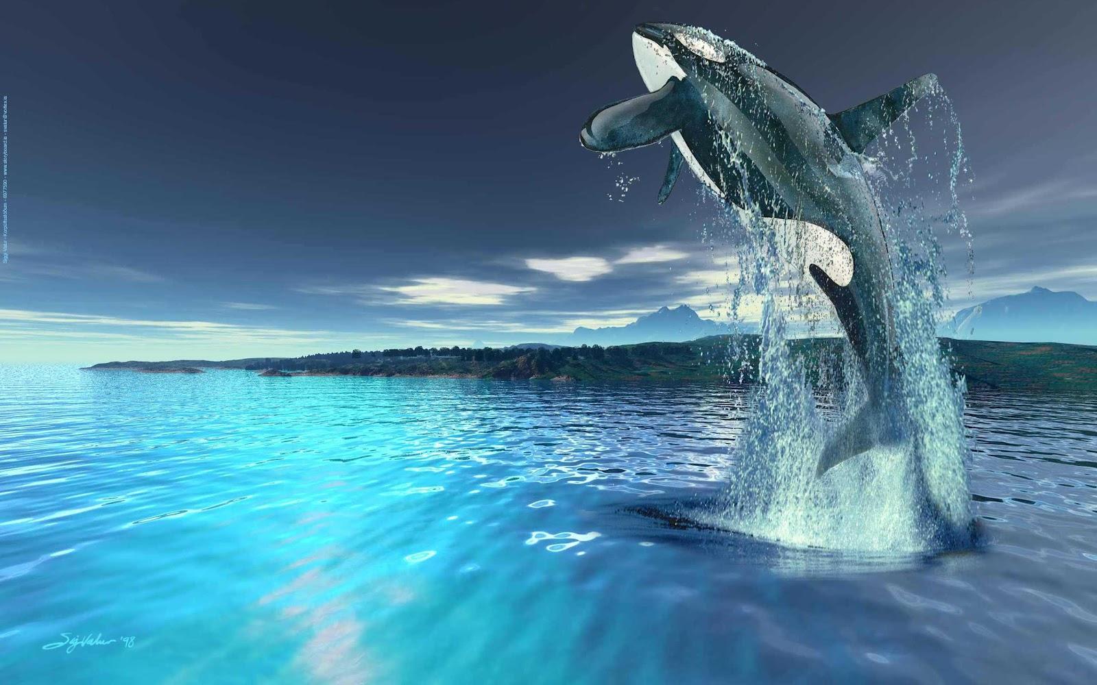 Killer Whales Wallpapers Fun Animals Wiki Videos