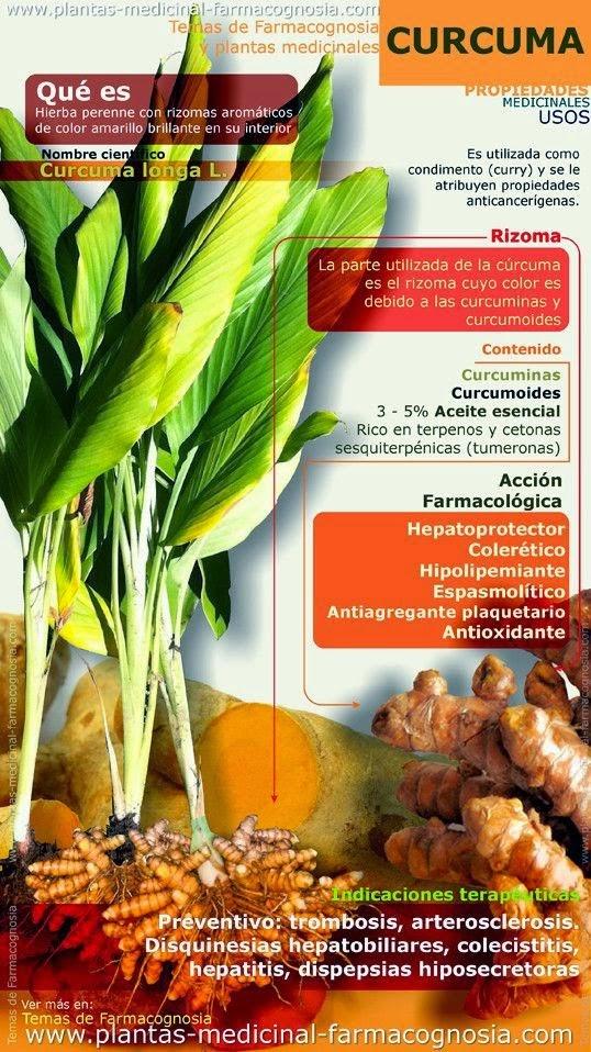 Cultivar el huerto casero hierbas arom ticas y medicinales - Plantar hierbas aromaticas ...