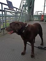 Labrador Retriever auf Aussichtsplattform; mit Hund im Museum; Industriekultur, Industriedenkmal, Hüttenwerk