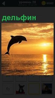 В свете заходящего солнца над водой высоко выпрыгнул дельфин