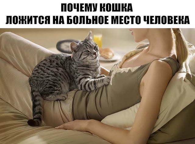 Больная кошка ложиться на человека
