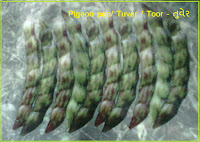 pigeon pea tuver seeds India