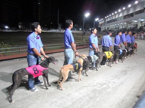 Các loại cá cược đua chó ở Việt Nam