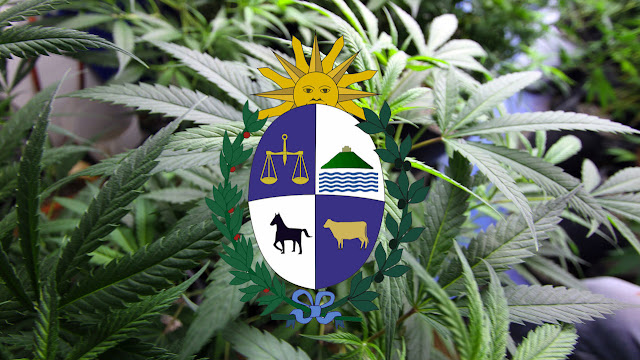 cannabis uruguay essay Jamaica voted tuesday night to decriminalize the possession of small amounts of marijuana, leading the region in softening penalties for pot possession and signaling an easing of decades of tension between the government and the caribbean island's rastafari community the law could pave the way.