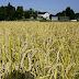 Renovando Fukushima con paneles solares y semillas