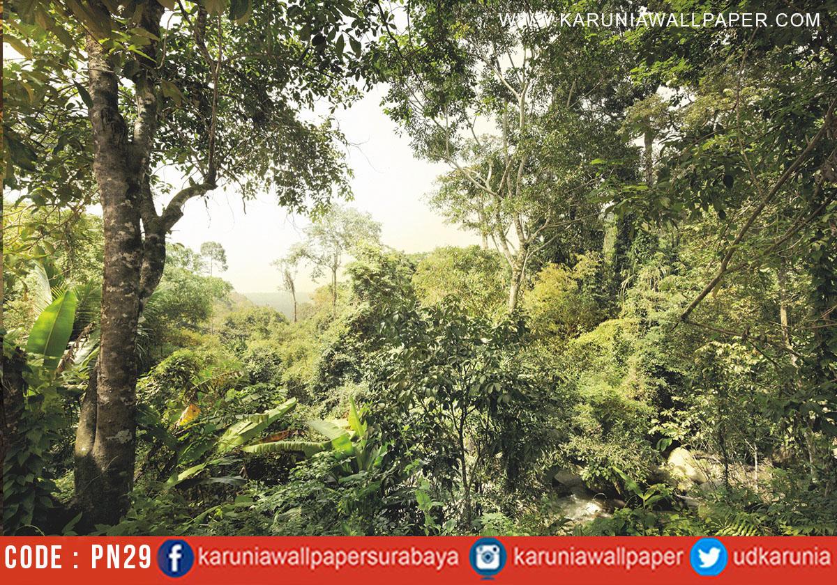 jual wallpaper photowall hutan alam