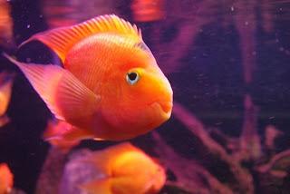 Pesci d'acquario in Vinpearl