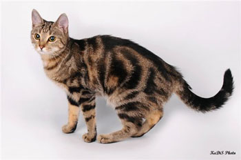 stop cat scratching wallpaper