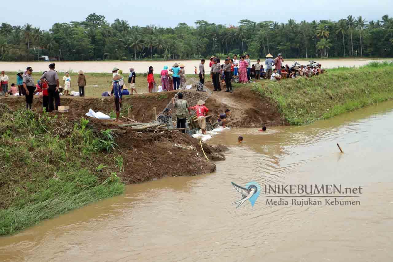 Tanggul Jebol, Puluhan Hektar Sawah di Kedungweru Terendam