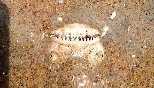 Stargazer was on the beach in Virginia