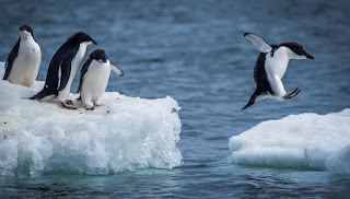 Google-peguin