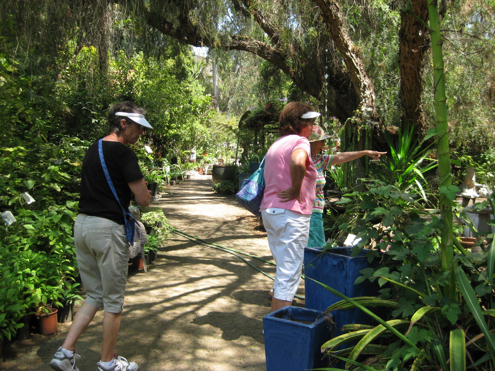 Travels With Marie: BUENA CREEK GARDENS IN SAN MARCOS