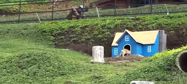 taman kelinci malang, rumah hobbit pujon malang, taman kelinci dan rumah hobbit pujon malang jawa timur