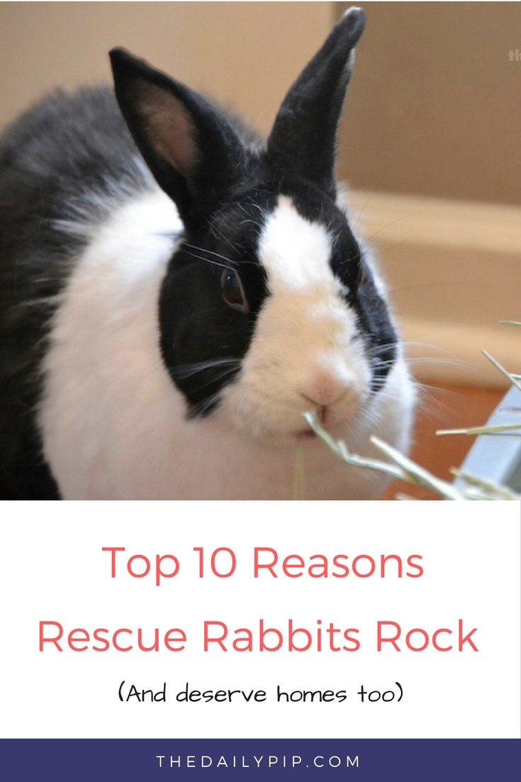 Adopt A Rescue Rabbit
