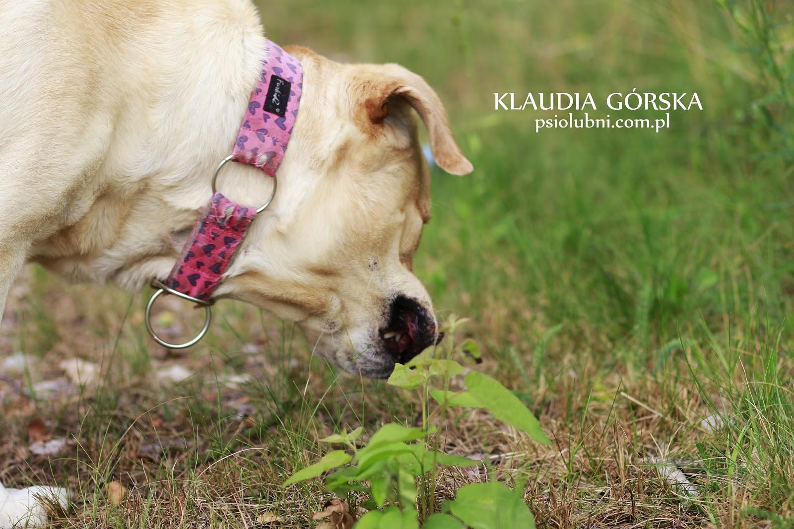 spacery z psem, sposoby na urozmaicenie, be active, psiolubni