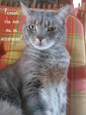 Rumore di fusa il gatto offeso al vostro rientro dalle for Buongiorno con gattini