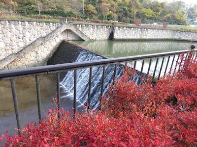 磐船神社周辺 天野川 ドウダンツツジ