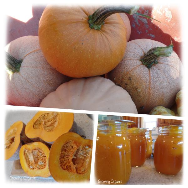 Growing Organic : How to Make Pumpkin Puree