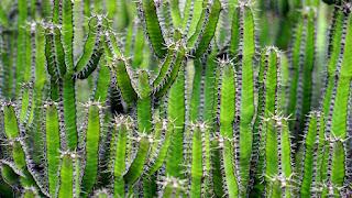 Image verte de cactus