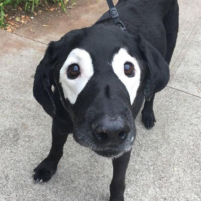 Animais com vitiligo