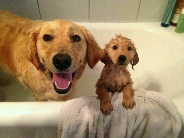 Cute dogs - part 255, cute dog image, dog photos, best funny dog image