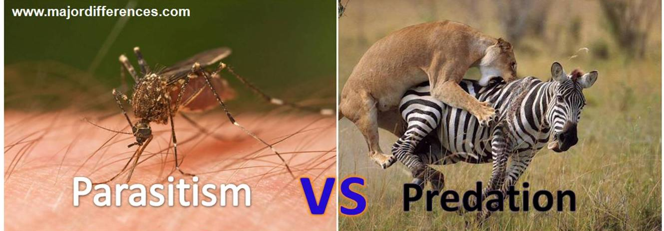 Predation Relationship 6 Differences between ...