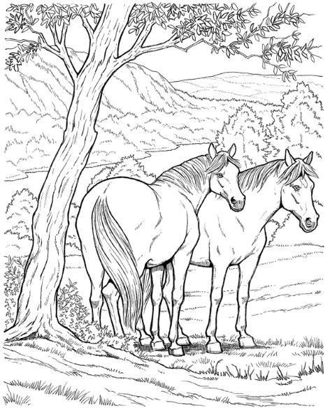 Tranh tô màu hai con ngựa trên thảo nguyên