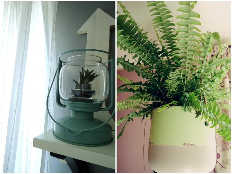 moje rośliny, sukulent w nowej aranżacji