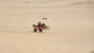 Used to drag lazy people across the desert