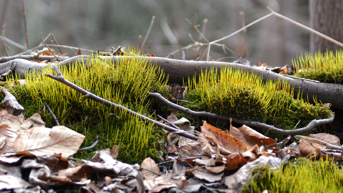 Woods Walks And Wildlife Growing Moss And The First Moth