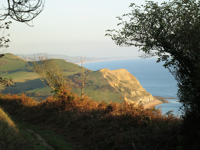South coast cliffs, the sea and an autumn hedgerow on the way up to Golden Cap, Dorset