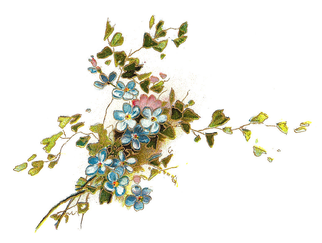 clip art forget me not flower - photo #36