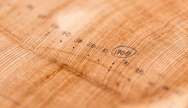 Between the lines: Tree rings hold clues about a river's past