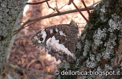 fattoria didattica bologna savigno farfalla valsamoggia rose orto zocca ortica