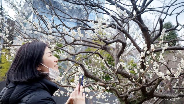 Bunga Plum di Shiba Park
