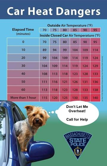Car Heat Dangers for your dog