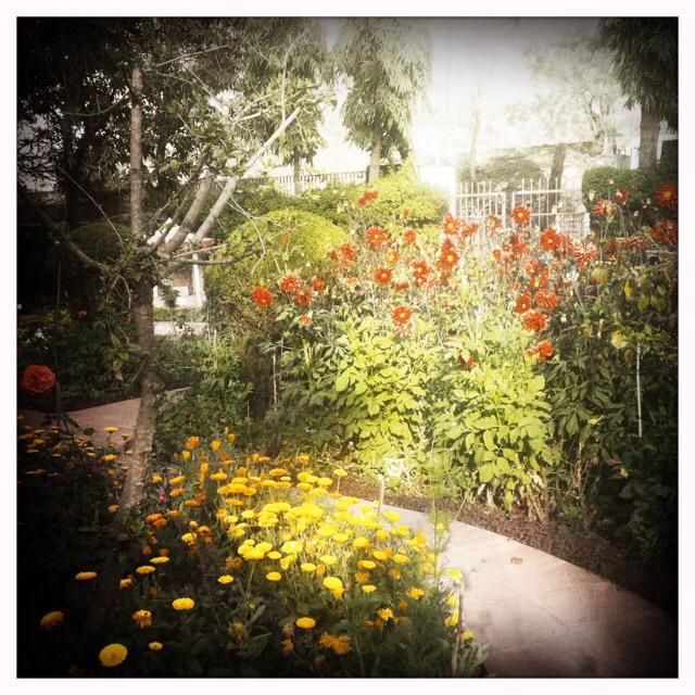 Sadhana Mandir Ashram Flowers