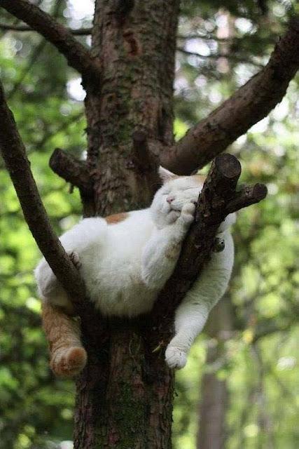 Các chị mèo bất chấp chỗ ngủ
